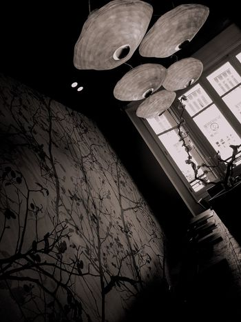 Low Angle View No People Day Black And White Blackandwhite Blackandwhite Photography Black And White Photography Sushi Light Flower Life Branch