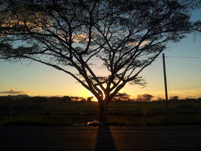 Beautiful Sunrise ♡ had to stop to Enjoy The View for a few minutes ^_^ Hugging A Tree The EyeEm Facebook Cover Challenge