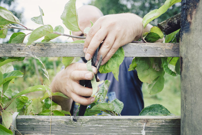 Close-up of man holding plant