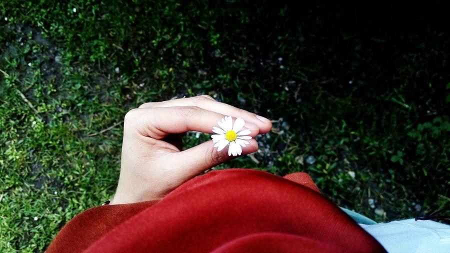 """Sana da kırgınım papatya, birini seviyordum sığdıramadın onca yaprağına,, Can Yücel Papatya Flower Collection Green And White Bolu TURKEY Bolu  White And Yellow Where Bolu..TURKEY Daisy Daisy Flower Alone Alone Flower Human Hand Low Section Flower Human Leg Red Women Personal Perspective Close-up Grass"