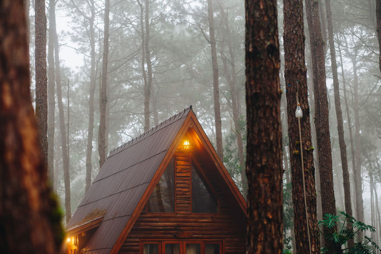 Close-up of house roof against trees in forest