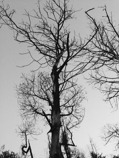 """Darkness"" Black And White Trees Mountain taken by Samsungs4mini Bali, Indonesia"