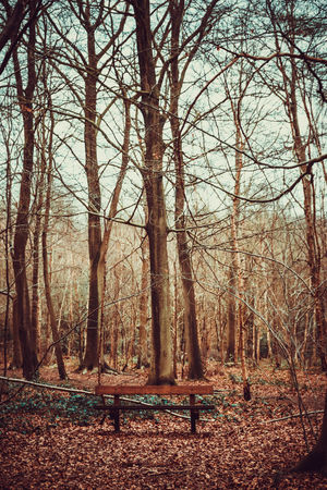 Autumn Bare Tree Beauty In Nature Bench Branch Day Forest Landscape Lots Of Leaves Nature No People Non-urban Scene Outdoors Portrait Scenics Sky Tranquility Tree Tree Trunk WoodLand The Great Outdoors - 2017 EyeEm Awards
