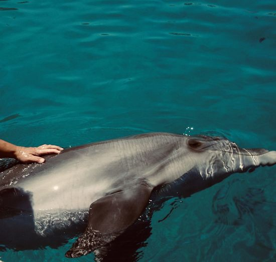 Woman hand touching dolphin in the sea