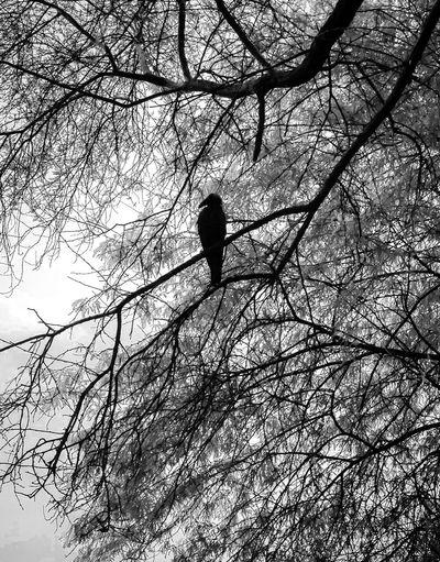 🌒 Tree Branch