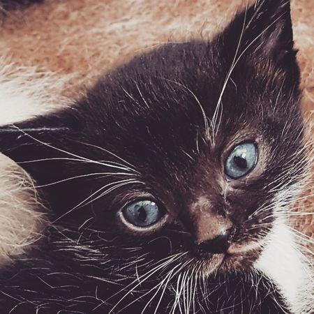 Animal Themes One Animal Animal Domestic Cat Pets Domestic Domestic Animals Cat Feline