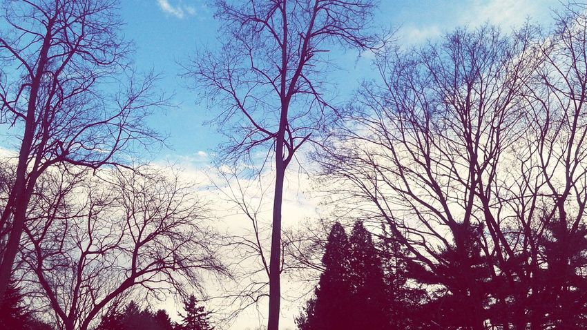 Low Angle View Tree Sky Bare Tree Branch Nature Day