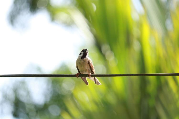 Jack Bird