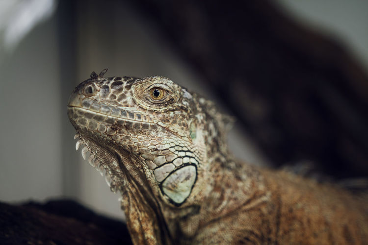 Close-Up Of Lizard At Zoo