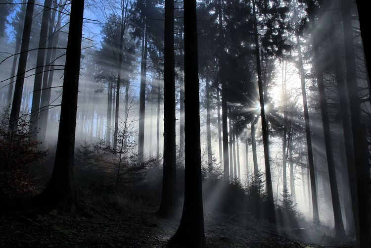 Low Angle View Of Sunlight Streaming Through Trees At Forest