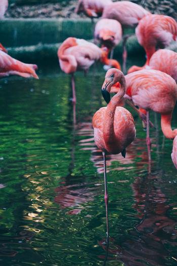 Close-up of flamingo in lake