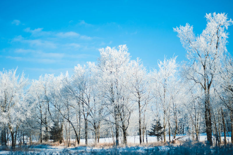 Snow Tree Cold Temperature Winter Plant Sky Nature Bare Tree Frozen Scenics - Nature Cloud - Sky Day No People Beauty In Nature Tranquility Environment Tranquil Scene Blue Landscape Outdoors Blizzard Snowing
