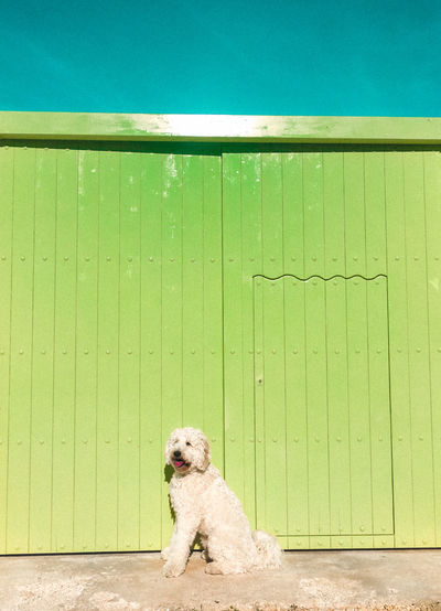 Portrait of dog on wooden fence
