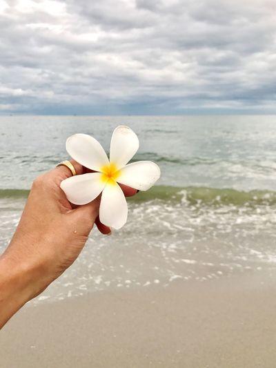 Cropped hand holding frangipani at beach