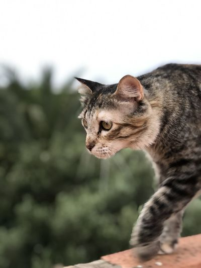 Close-up of a cat looking away