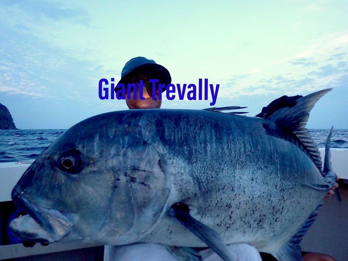 34kg Fishing Giant Trevally Sea Fish Animal Underwater Vertebrate Water Text Sea Life Marine Communication Nature Nautical Vessel Close-up