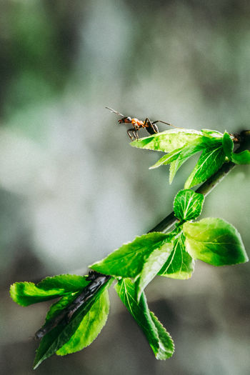 Tree Tiny Beauty In Nature Spring Tree First Eyeem Photo Ant Ants EyeEmNewHere Nature Nature Photography Outdoors EyeEm Nature Lover Naturelovers Leaf Insect Close-up Animal Themes Green Color Plant Cherry Tree