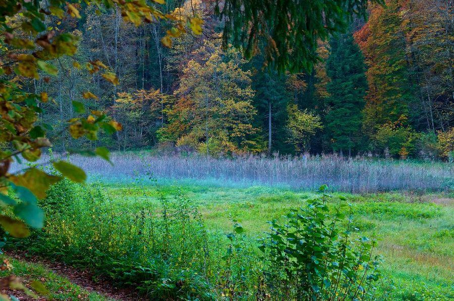 Autumn Landscape Autumn Autumn Colors Autumn Leaves Herbst Landschaft Beauty In Nature Beauty In Nature Colorful Colorful Nature Day Dusk Fog Green Color Landscape No People Scenics Tree