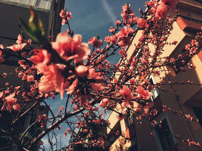 spring Spring Nature Flower Tree Beauty In Nature Growth Freshness Springtime Pink Color Sky Millennial Pink
