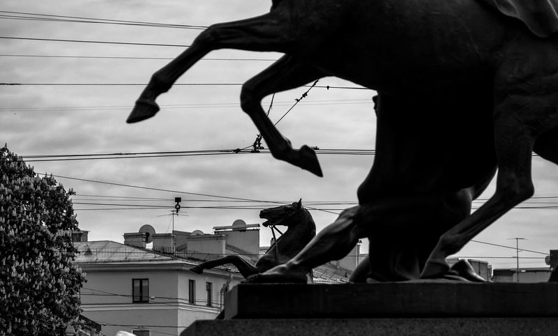 Russia, St. Petersburg, Horses, Architecture, Klodt Architecture Cable Cloud Cloud - Sky Cropped Day Horses Low Angle View Outdoors Part Of Power Line  Russia россия Sky St. Petersburg, Russia