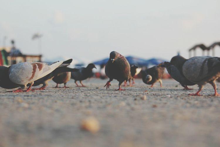 Pigeons on railing