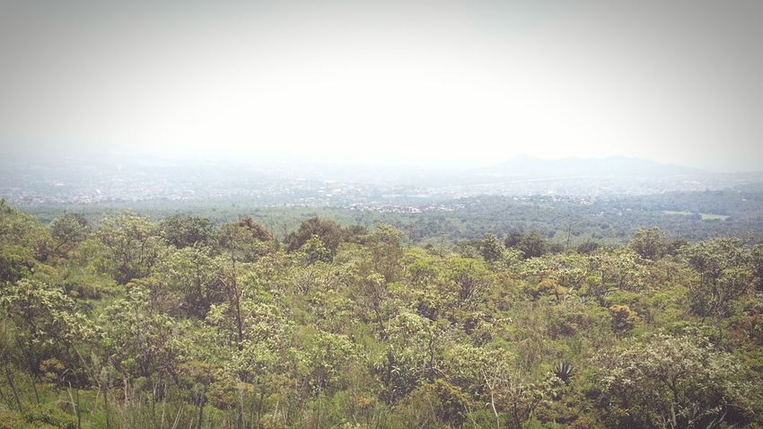 Ciclopista Ajusco Picacho Girasol Naturaleza Caminata Naturaleza🌾🌿 Day Sky Beauty In Nature Nature Tree Mountain