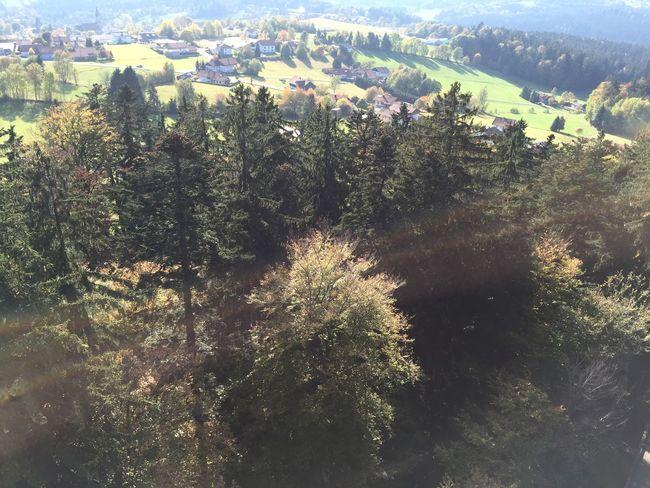 Treetopwalk Bavaria Nationalpark Bayerischer Wald Birdview High Above Sunny☀ Hanging Out Forest Trees