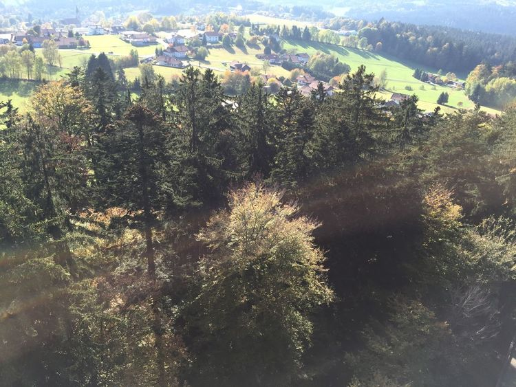 Treetopwalk Bavaria Nationalpark Bayerischer Wald Birdview High Above Sunny☀ Hanging Out Forest Trees