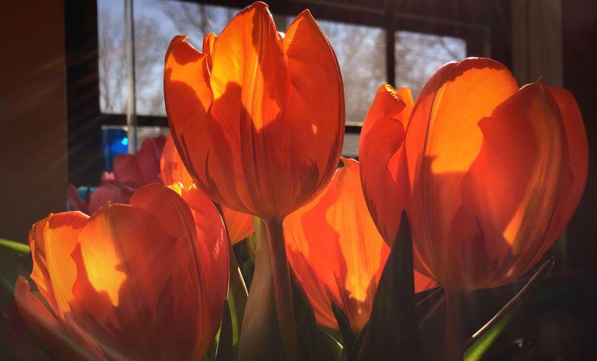 Close-up of orange flowers
