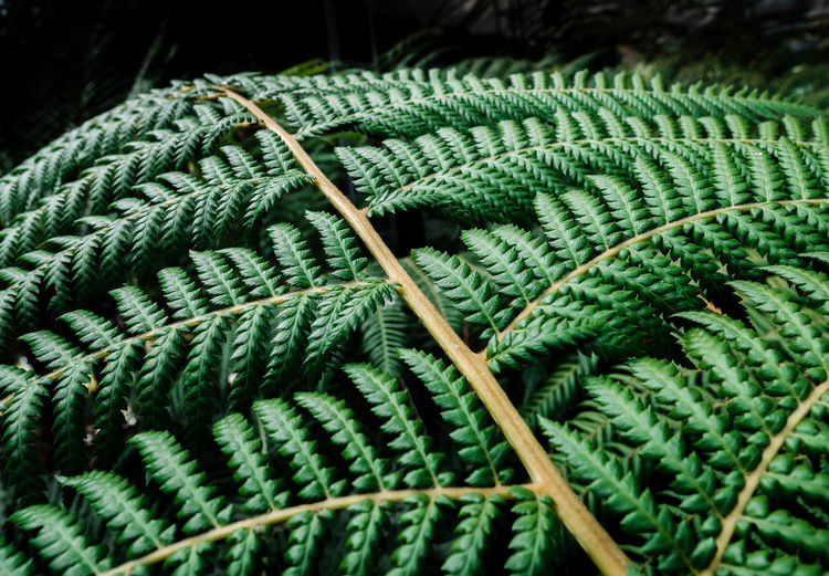 Tropical ferns leaves green; natural background concept. Green Color Textile Wool Close-up Pattern No People Indoors  Art And Craft Material Creativity Full Frame Day Thread Textured  Rope Craft Backgrounds Studio Shot High Angle View Softness