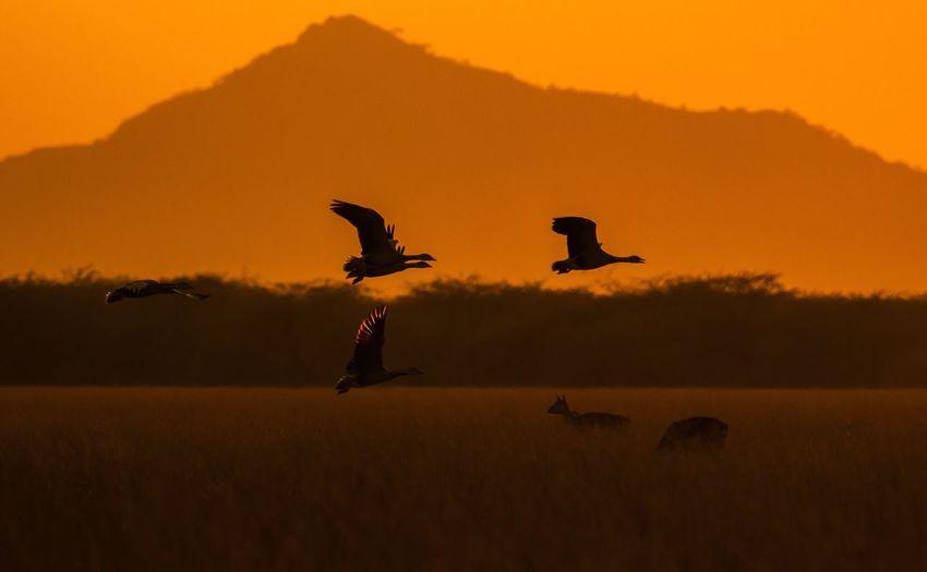 Flock of