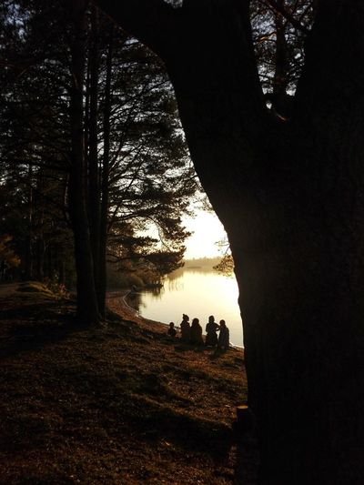 Silhouette people by trees in forest