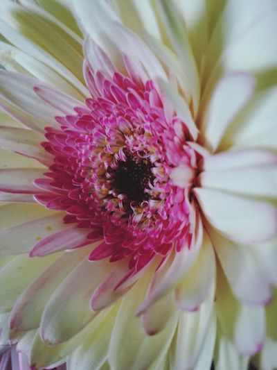Cream of the Crop.... Flower Head Flower Springtime Stamen Petal Pink Color Uncultivated Blossom Pollen Beauty Plant Life Botany In Bloom