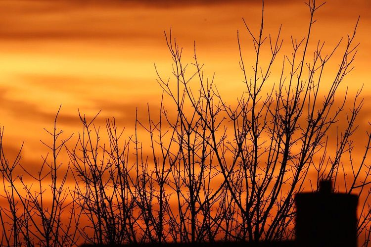 Sunrise in Northamptonshire with backlit chimney Sunrise Sun Morning Northamptonshire Northampton Northants Backbit Backlight Chimney Trees Clouds Red Sky Orange Sky Weather Weather Channel The Weather Channel