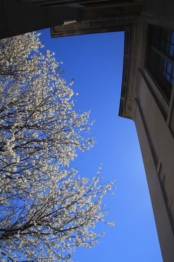 Spring season. Low Angle View Built Structure Flower Building Exterior Blossom Day Nofilter