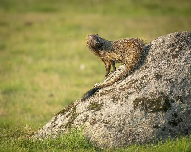 Side view of a lizard on rock