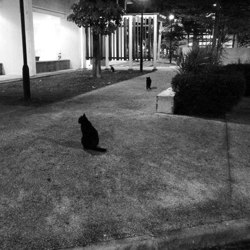 Cats HDB Night