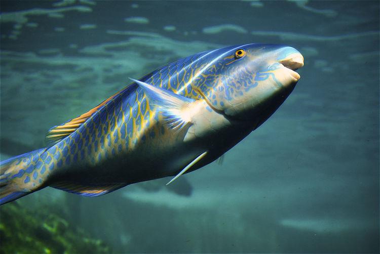 Smile of partir fish