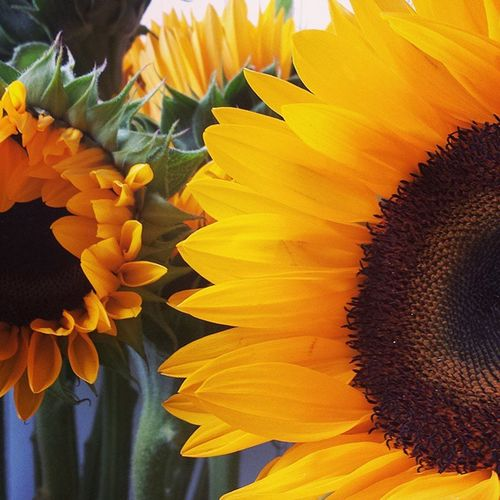 Sunny Sunflowers from work today. Florist Flowershop Flowers