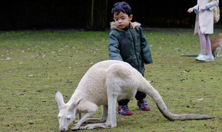 Boy standing by kangaroo at zoo
