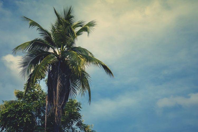 Coconut Coconut
