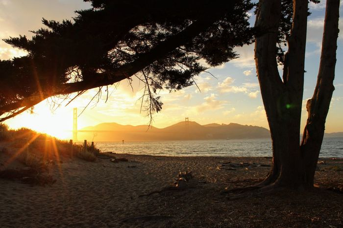 Crissy field beach sunset with Golden Gate bridge in view Tree Branches Nature_collection Sunset No Filter Sea Horizon Over Water Tranquil Scene Wave Ocean Coast Idyllic Calm Scenics Tranquility Tree Trunk Shore Seascape
