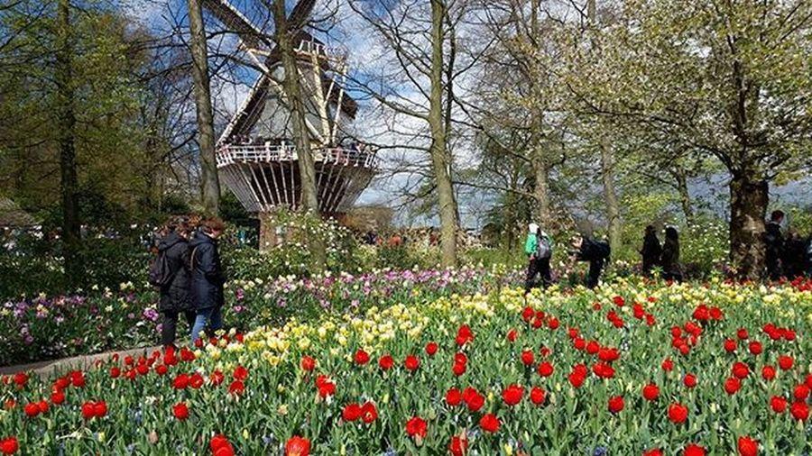 Keukenhof Gardens Keukenhofgardens Flowers
