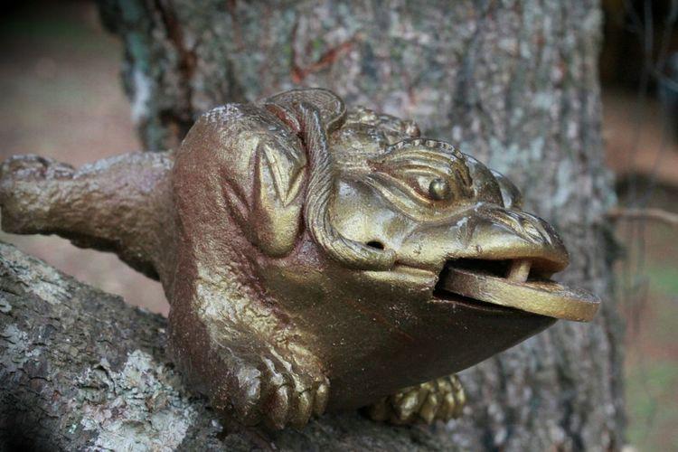 forg Reptile Wood Wood - Material Art Animal Themes Wood Animal Close-up Iguana Animal Eye Animal Scale Animal Skin Ecuador Wooden