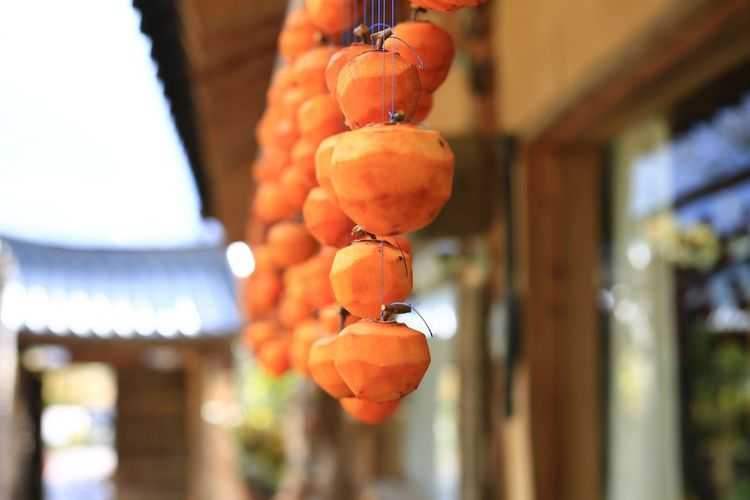 Close-up of orange fruits hanging on tree