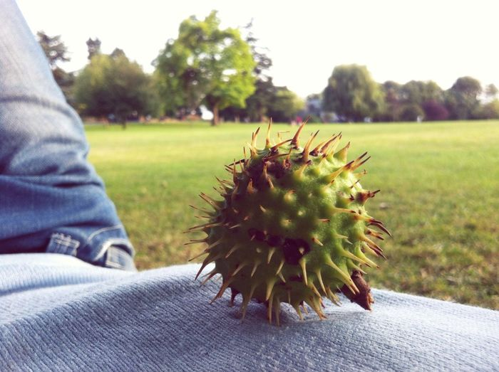 King Edward Vii Park Park Chesnut Nature Hugging A Tree Relaxing Londonlife Wembley Beauty In Nature