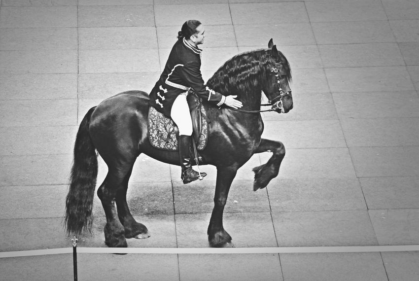 Horse Friesian Dressage Spanish Walk