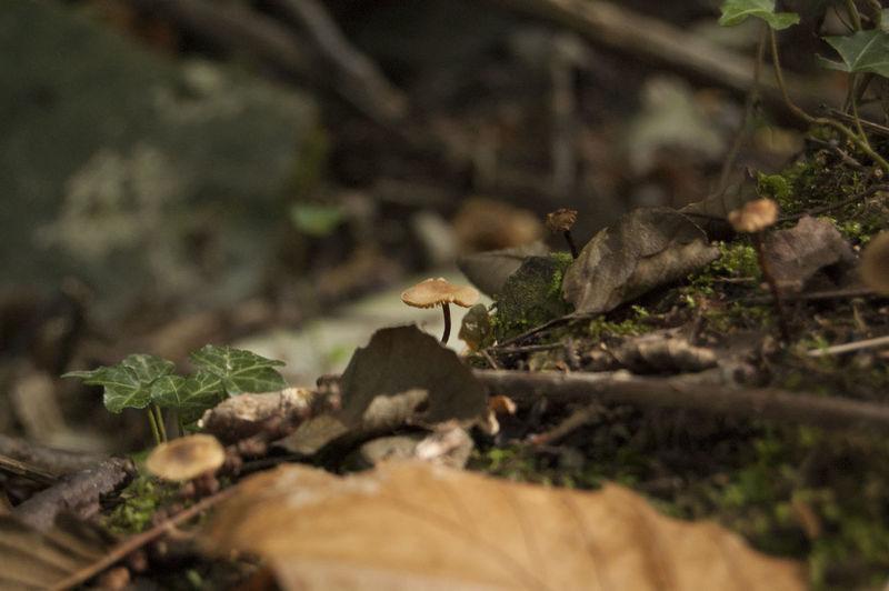 Close-up of mushroom on plant