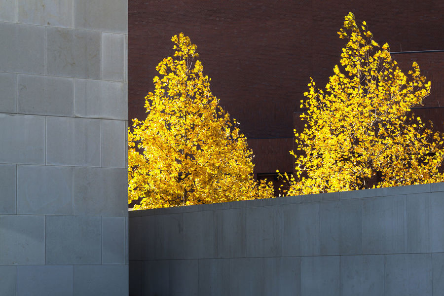 Composition Architecture Backgrounds Building Exterior Built Structure Close-up Day Growth Minimalism Nature No People Outdoors Tree Yellow The Graphic City