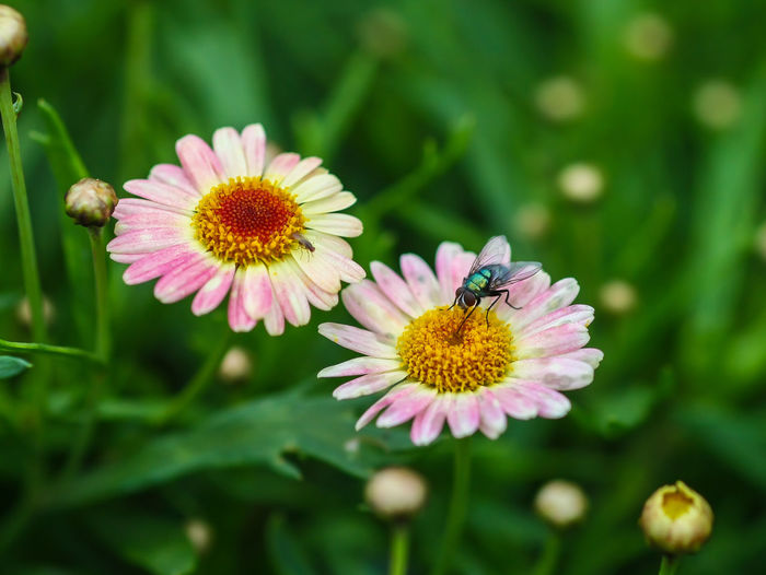 One day in Spring farm, an Ecotourism spot Animal Themes Beauty In Nature Blooming Close-up Coneflower Day Eastern Purple Coneflower Flower Flower Head Fragility Freshness Growth Insect Nature No People Outdoors Petal Pink Color Plant Pollen Pollination